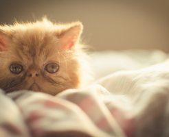 ベットの上の子猫