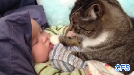 cat-love-baby-10