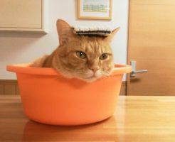 風呂桶に入る猫