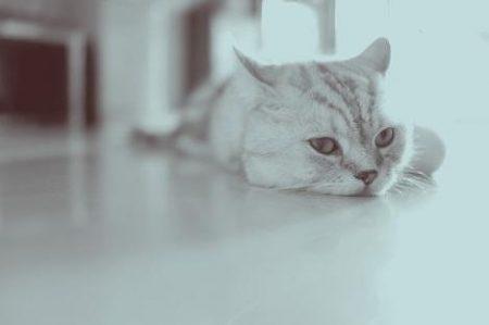 ダルそうな猫