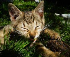 草原子猫1