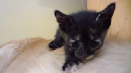 kitten-bigdog-2