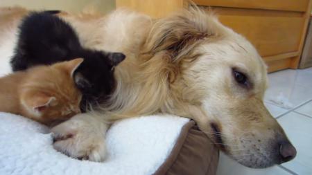 kitten-bigdog-9