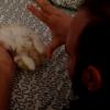 【魔法?!】子猫が催眠術をかけられる動画が不思議すぎる。