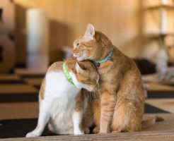 首輪をした2匹の猫