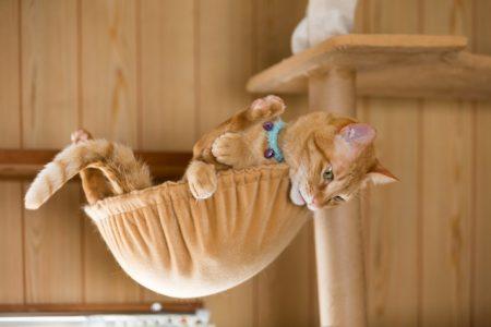 キャットタワーで遊ぶ首輪をした猫