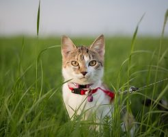リードに繋がれた猫