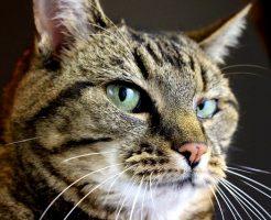 企んでる顔の猫