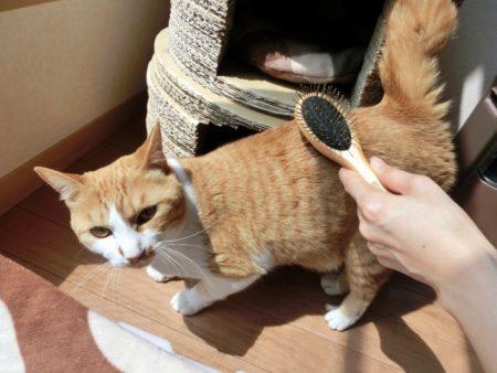 猫とブラシ